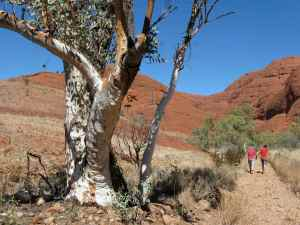 Dry creek bed, Kata Tjuta