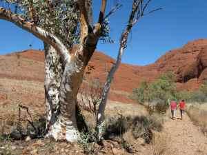 Dry creek bed, Kata Tjuta