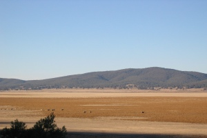 Paddocks in Lake George, 2005