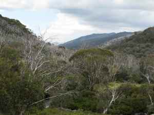 Snowy Mountains, near Thredbo