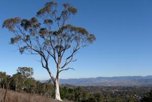 Isaacs Ridge, Canberra