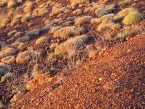 Pilbara landscape, Newman, WA