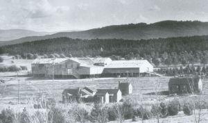 Yarralumla Woolshed, 1925