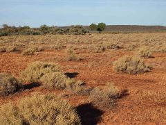 Samphire Shrubland